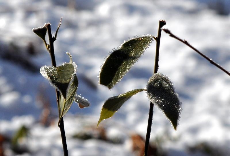 霜の朝.JPG